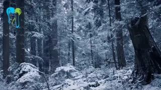 زمستان فصل با طراوت وزیبای است | دکتر شریفی میلانی