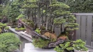 باغ بونسای