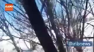 ویدئویی عجیب از یخ زدن پرندگان روی درخت در خلخال