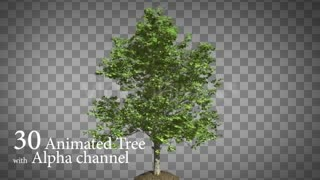 دانلود فوتیج موشن گرافیک متحرک درخت (کروماکی) Animated Tree