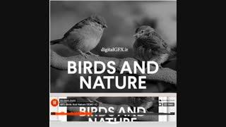 مجموعه صداهای پرندگان و طبیعت Sound Birds and Nature