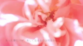 SWEET MEMORIES松田聖子 full covered by 春茶