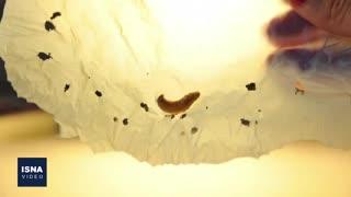 از کرم پلاستیکخوار تا بررسی شهابسنگی که به سمت زمین میآید