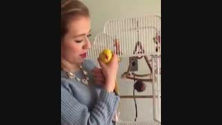 کلیپ دختر خارجی  و طوطی زردِ قناری